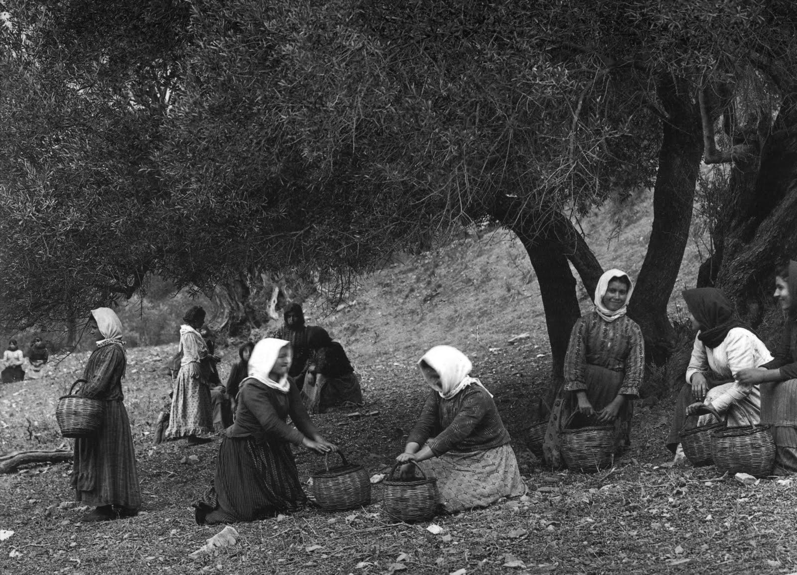 Μαζώχτρες ελιάς στην Πρέβελη - 1911