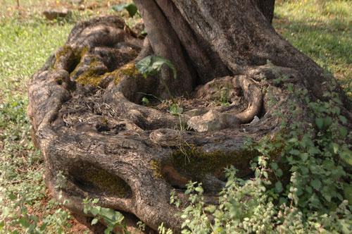 Ελιά Λάκκου - Σαμωνά Αρμένων