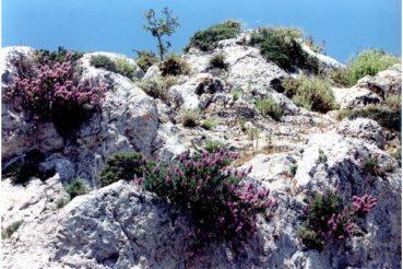 Η ανεξέλεγκτη συγκομιδή έχει βάλει σε τεράστιο κίνδυνο τα βότανα της Κρήτης