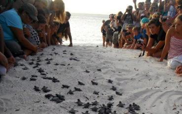 Τα πρώτα χελωνάκια του 2016 κολυμπάνε στα νερά της Κρήτης