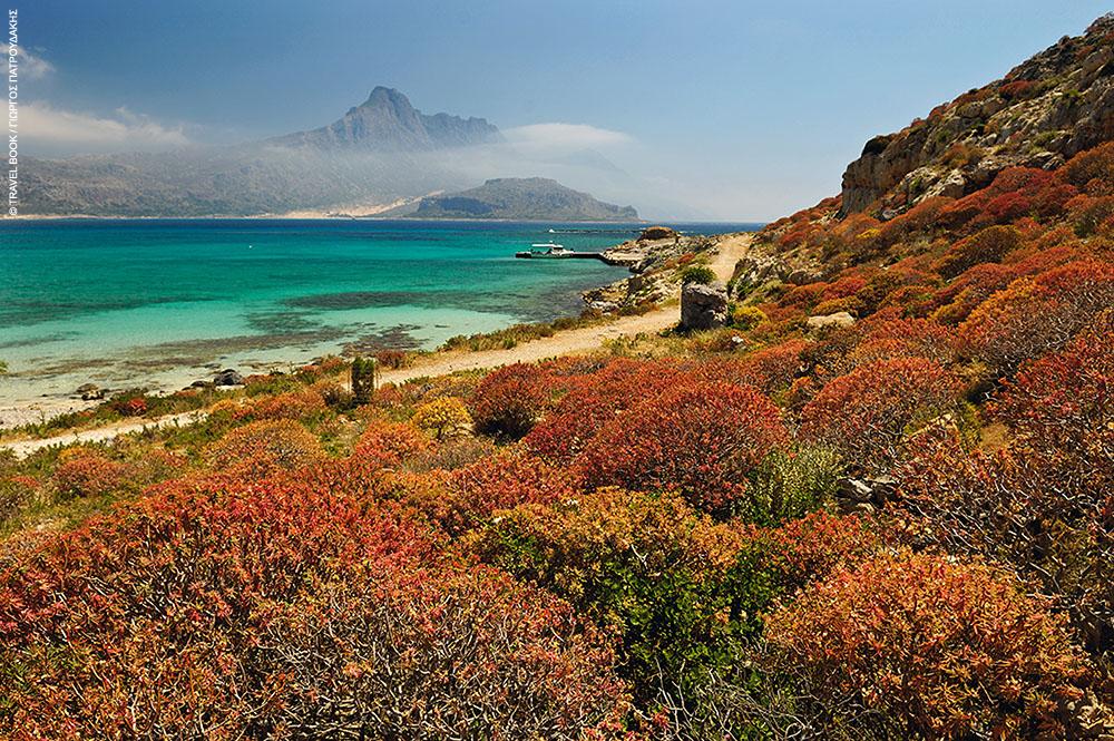 Οι δενδρόφλομοι της Γραμβούσας στρώνουν μαγευτικά χαλιά στο ακατοίκητο νησί