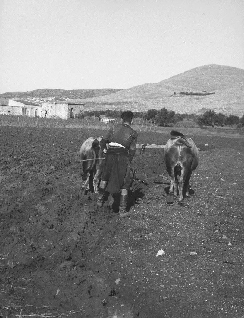 Κρήτη 1941. Αγρότης οργώνει το χωράφι του