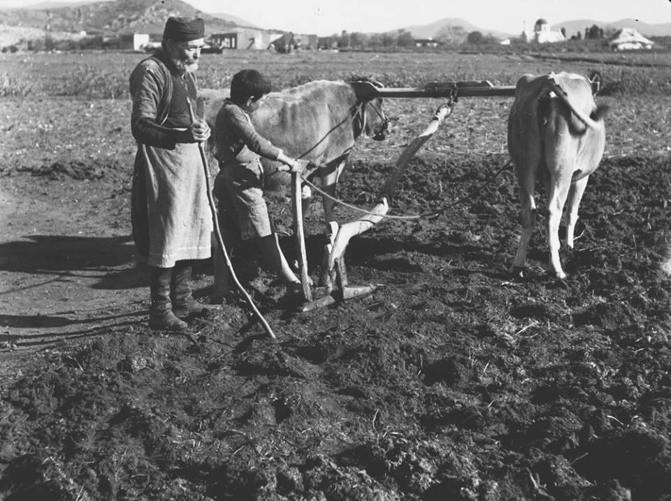 Κρήτη 1941. Όργωμα χωραφιού στο Καρδουλιανό