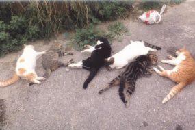 Απειλείται με πρόστιμο-ρεκόρ 480.000€ ο 77χρονος που δηλητηρίασε με φόλα 16 γάτες στο Ρέθυμνο