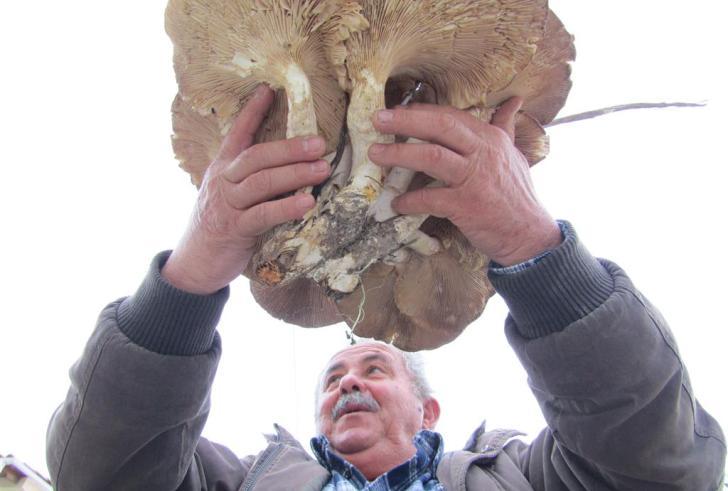 Βρήκε μανιτάρι γίγα 6,5 κιλών στο Ηράκλειο!