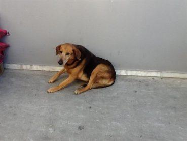 Ο Χάτσικο της Κρήτης – Το αφεντικό του πέθανε πριν από χρόνια, αλλά ο σκύλος του ακόμα τον περιμένει (βίντεο)