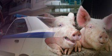 Γουρούνια επιτέθηκαν σε αστυνομικούς στην Κρήτη