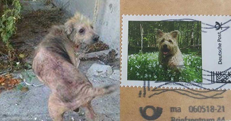 Σκύλος που βρέθηκε εγκαταλελειμένος στα Χανιά, έγινε γραμματόσημο στη Γερμανία